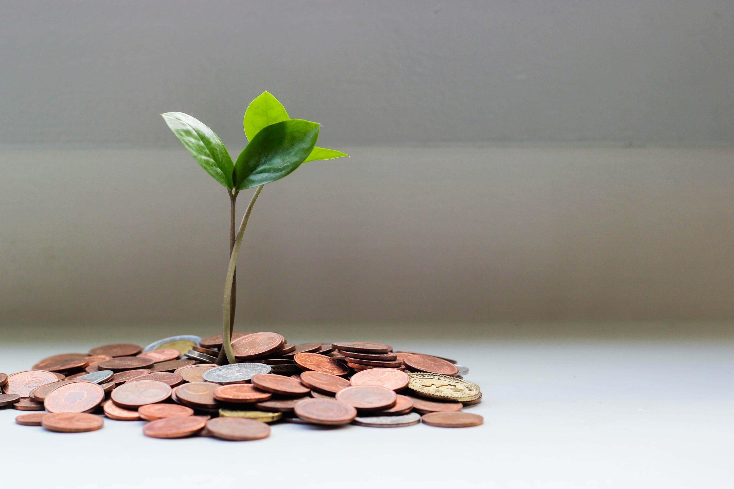 【仮想通貨】たった6ヶ月でお金が勝手に5倍増えた話